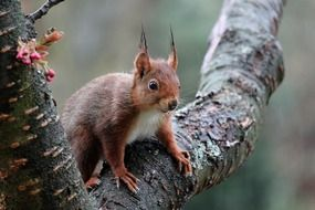 squirrel with oblong ears on a tree