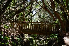 wooden bridge forest wild nature