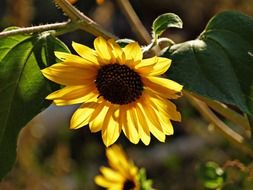 yellow sunflower with seeds
