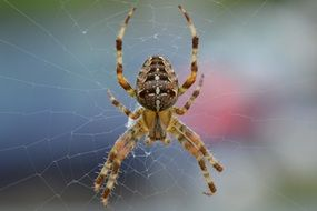 Spider closeup