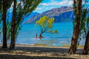 picturesque lake wanaka in New Zealand