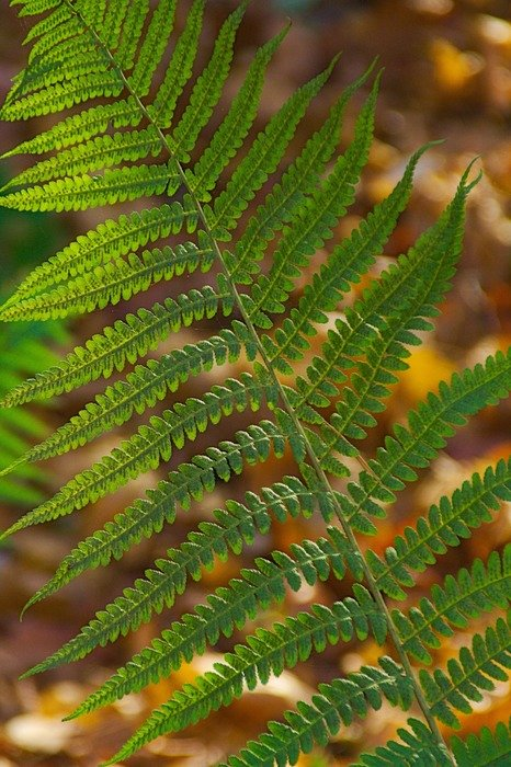 amazing nature green fern