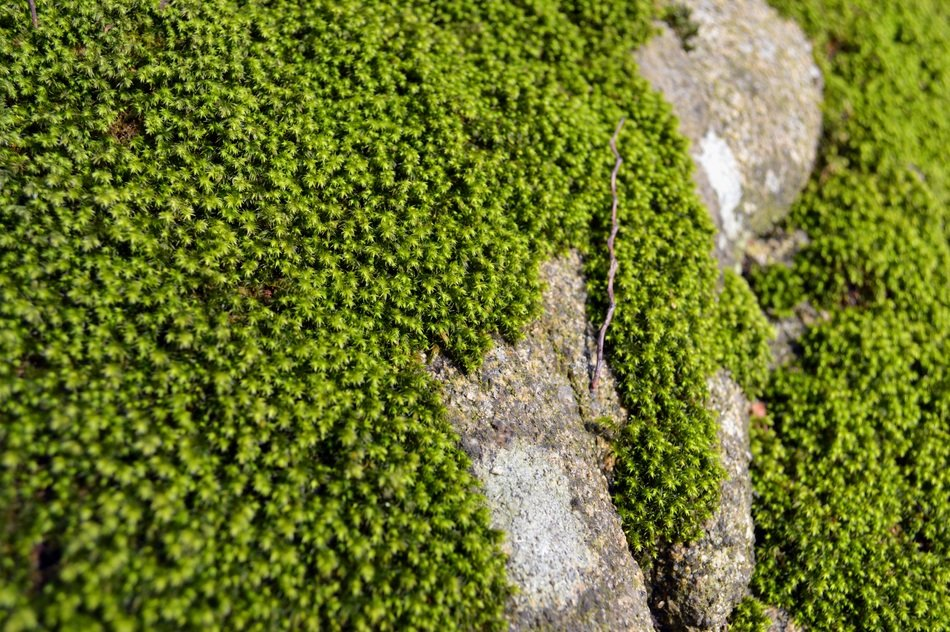 green moss on grey stone