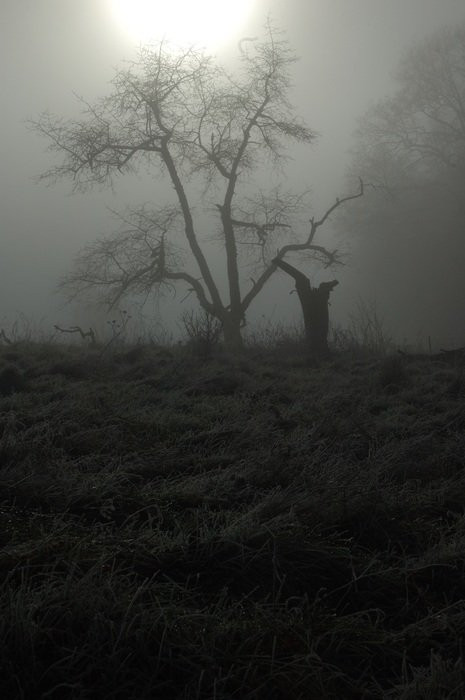young tree in dense fog