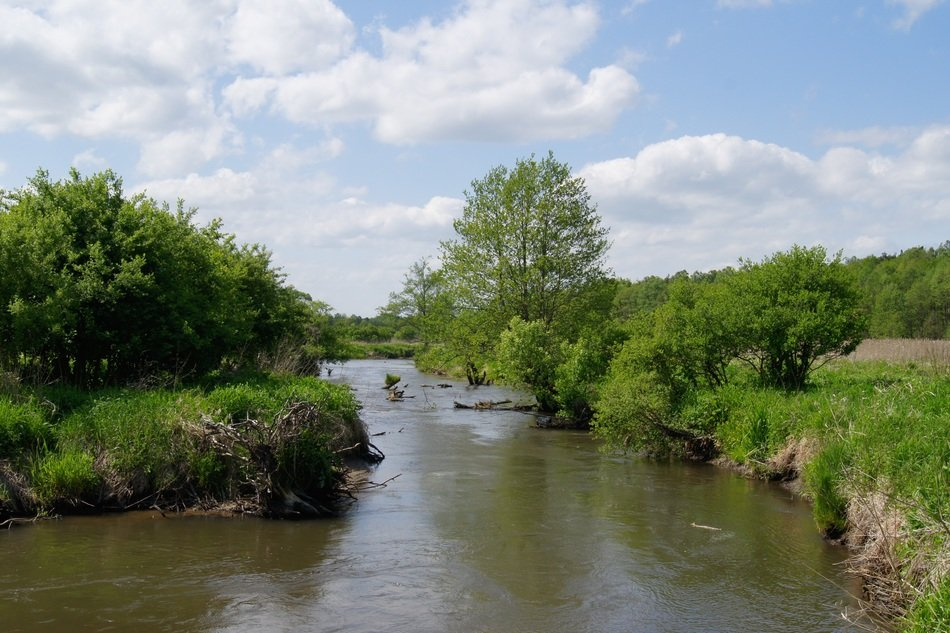 small river in summer landscape