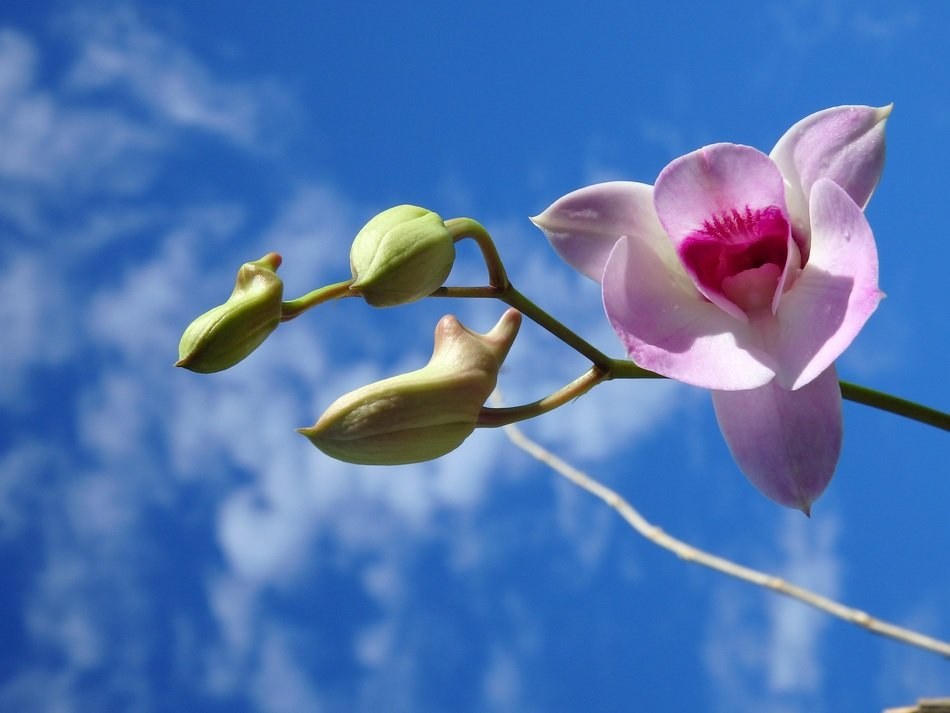 Pink orchid flower in nature