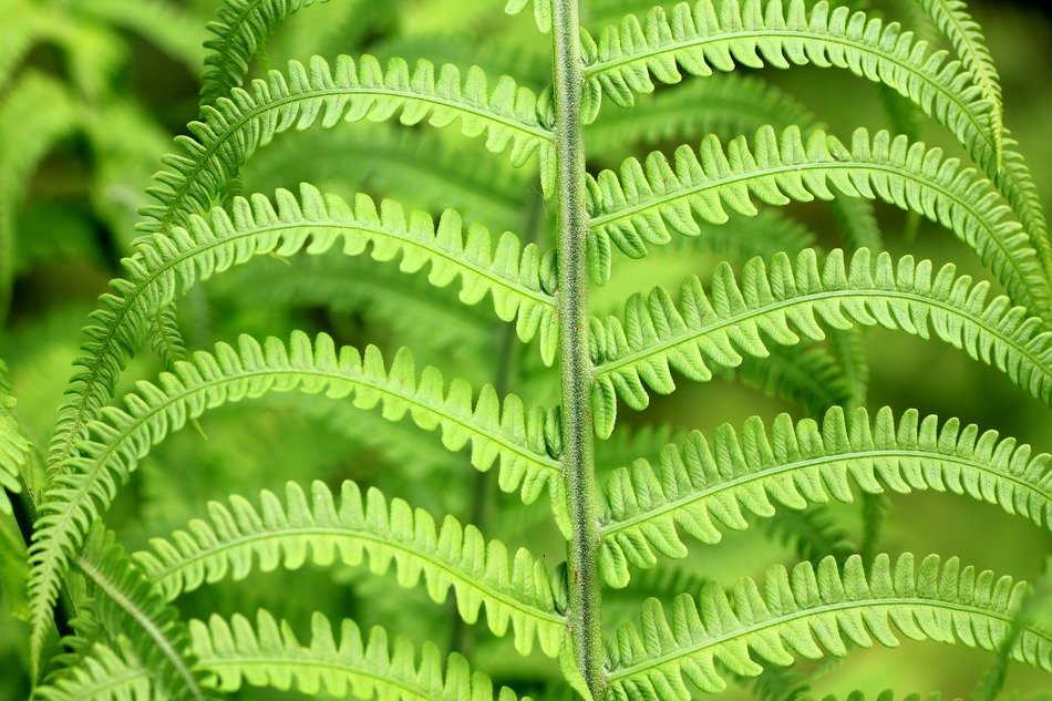 closeup photo of green fern leaves in forest