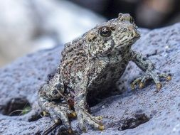 Toad on a stone