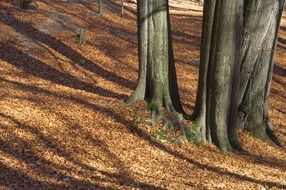 tree shadows in the autumn forest
