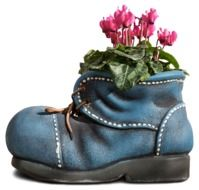 cyclamen in a flower pot in the form of a boot