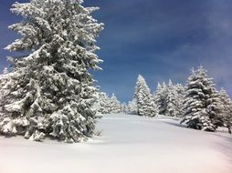 winter snow fir alsace