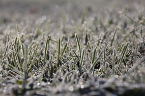 frost-covered grass