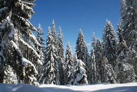 snowy forest on a clear sunny day