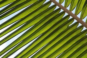 green leaf of the palm tree