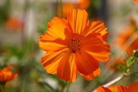 orange bright flower on a sunny day