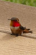 Hummingbird on a wooden surface