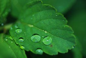 Dew drops on the leaves