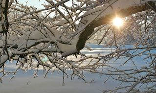 the sun behind the branches in the snow