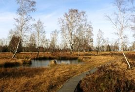 panoramic view of the wetland