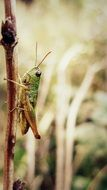 green grasshopper on a branch closeup
