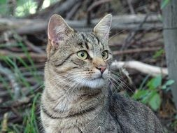 domestic cat outdoor