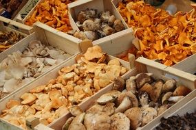 mushrooms chanterelles market
