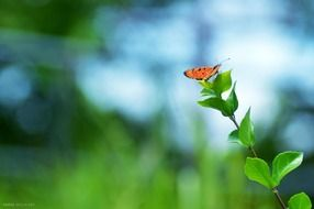 colorful orange butterfly on a branch of a young tree