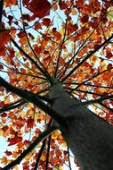 autumn tree bottom view