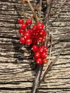 berries red currant on a wooden surface