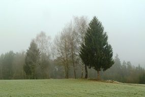 trees in a meadow in the morning mist