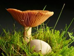 beautiful and delightful mushroom