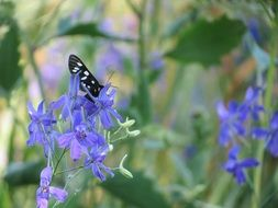 black and white butterfly is sitting on a purple flower