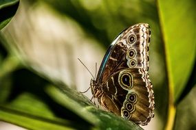 Nice butterfly on green plant