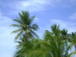 palm trees in the tropics of brazil