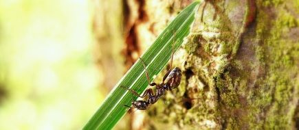 ant beneath grass blade, macro