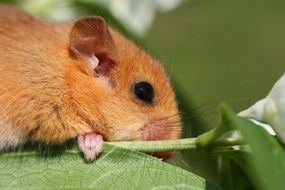 Cute dormouse in rainforest