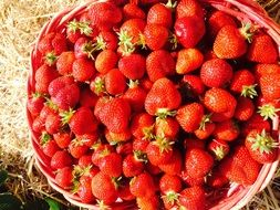 Basket full of red sweet strawberries