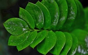 Bright green leaves in water droplets