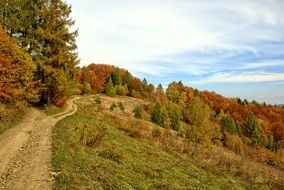 landscape of autumn colored forest on a hill in Poland
