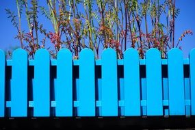 blue garden fence plants aback