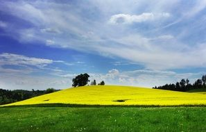 scenic rural field of rapeseeds