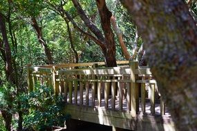 wooden bridge in the forest in Tenerife