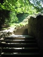 concrete steps in the forest