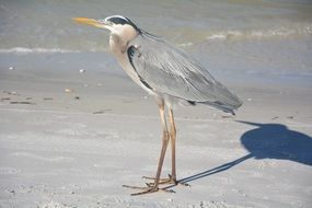 heron bird on sand beach