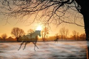 horses silhouettes in winter morning