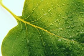 part of leaf with water drops, macro