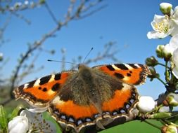 Bright orange butterfly on tree branch in summer