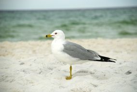seagull standing on the beach