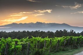 Amazing landscape of vineyards and mountains