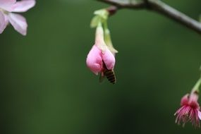 pink flower buds on a tree branch